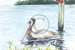 Pelican at Cedar Key